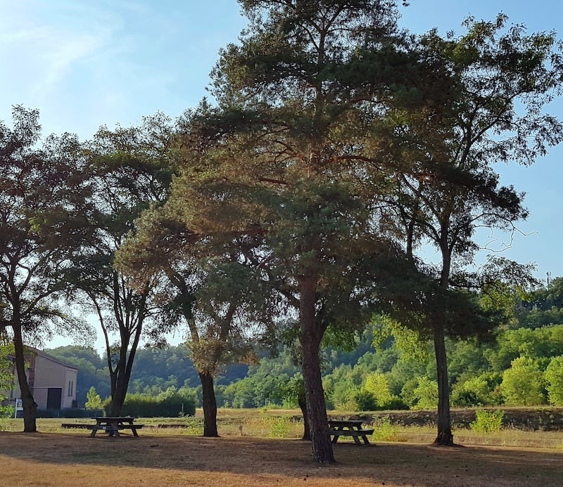aire de pique-nique ombragée à l'extérieure avec des tables et des bancs en bois
